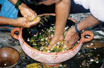 Le piante maestre privilegiate dagli sciamani
