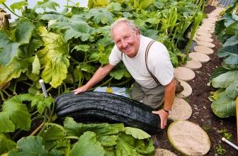 Philip Volwes: l'uomo che coltiva verdure giganti senza OGM