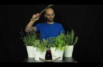 Herbalism: Ascoltare l'anima delle piante!